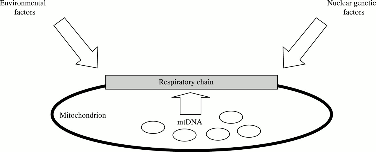 mitochondrial dna analysis Mitochondrial dna analysis: new guidelines of the isfg for legal medicine the  new guidelines for the analysis of mitochondrial dna (mtdna) were published.