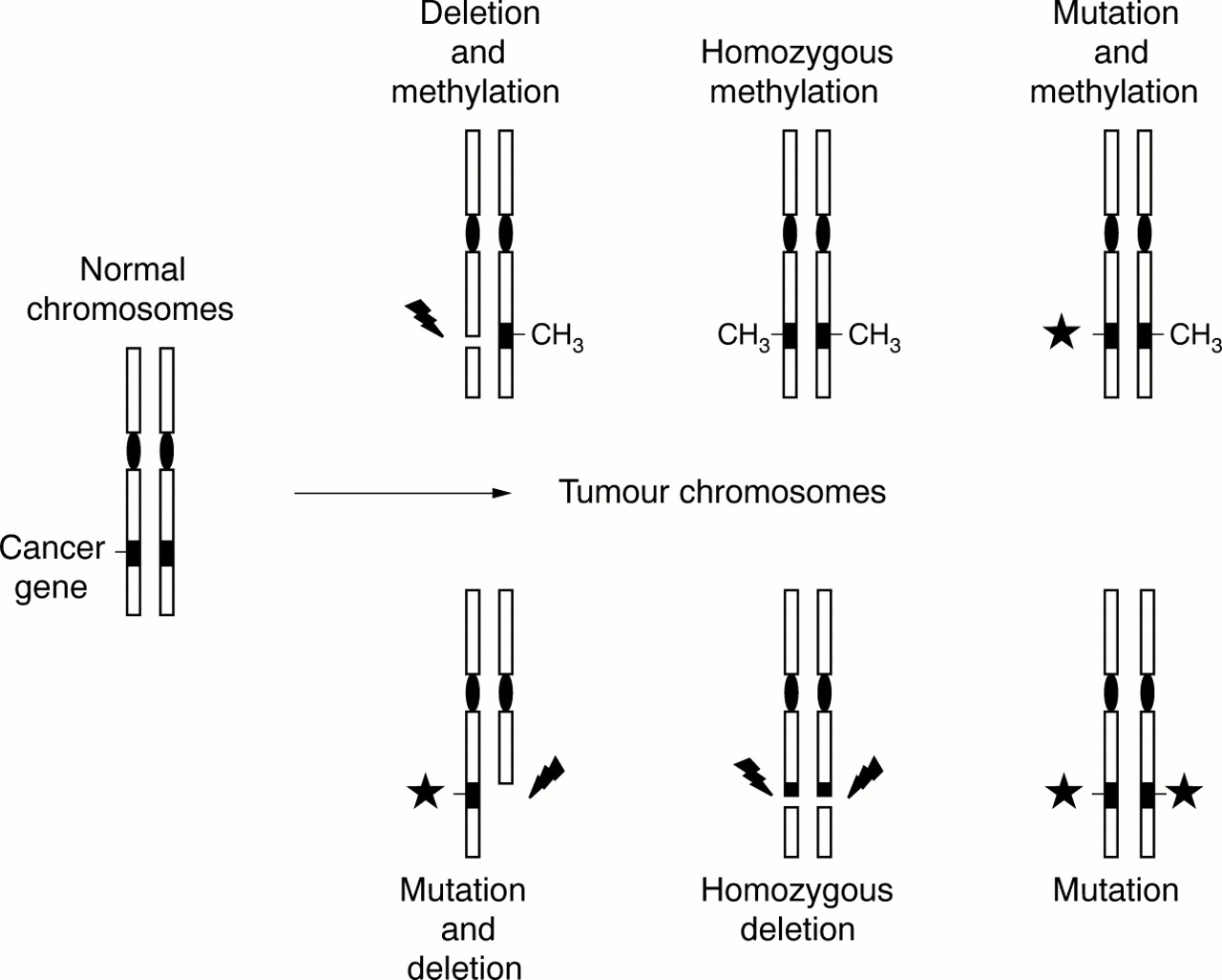 Methylation matters | Journal of Medical Genetics
