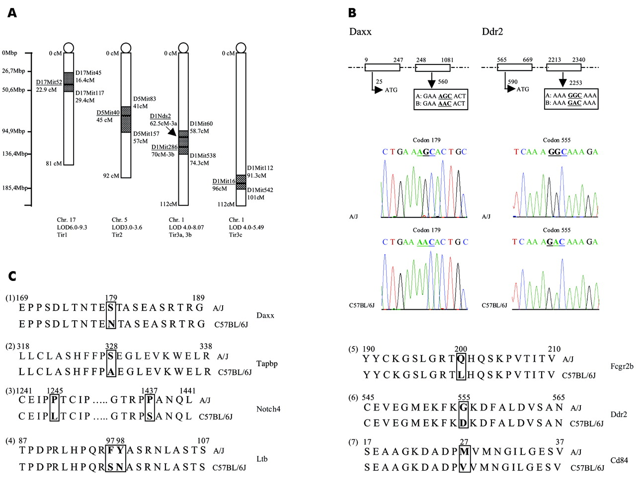 Snp single nucleotide polymorphism definition