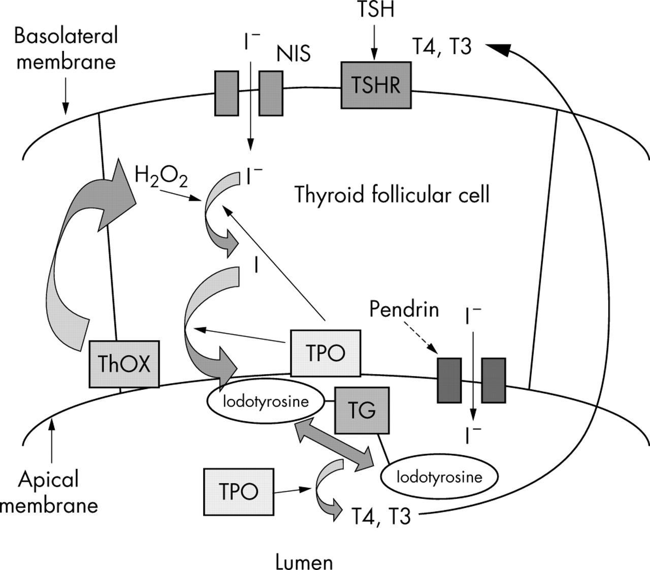 Figure 3 Journal Of Medical Genetics