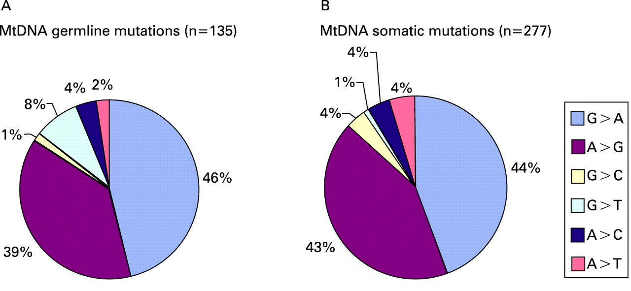 relationship of environmental and genetic basis cancer