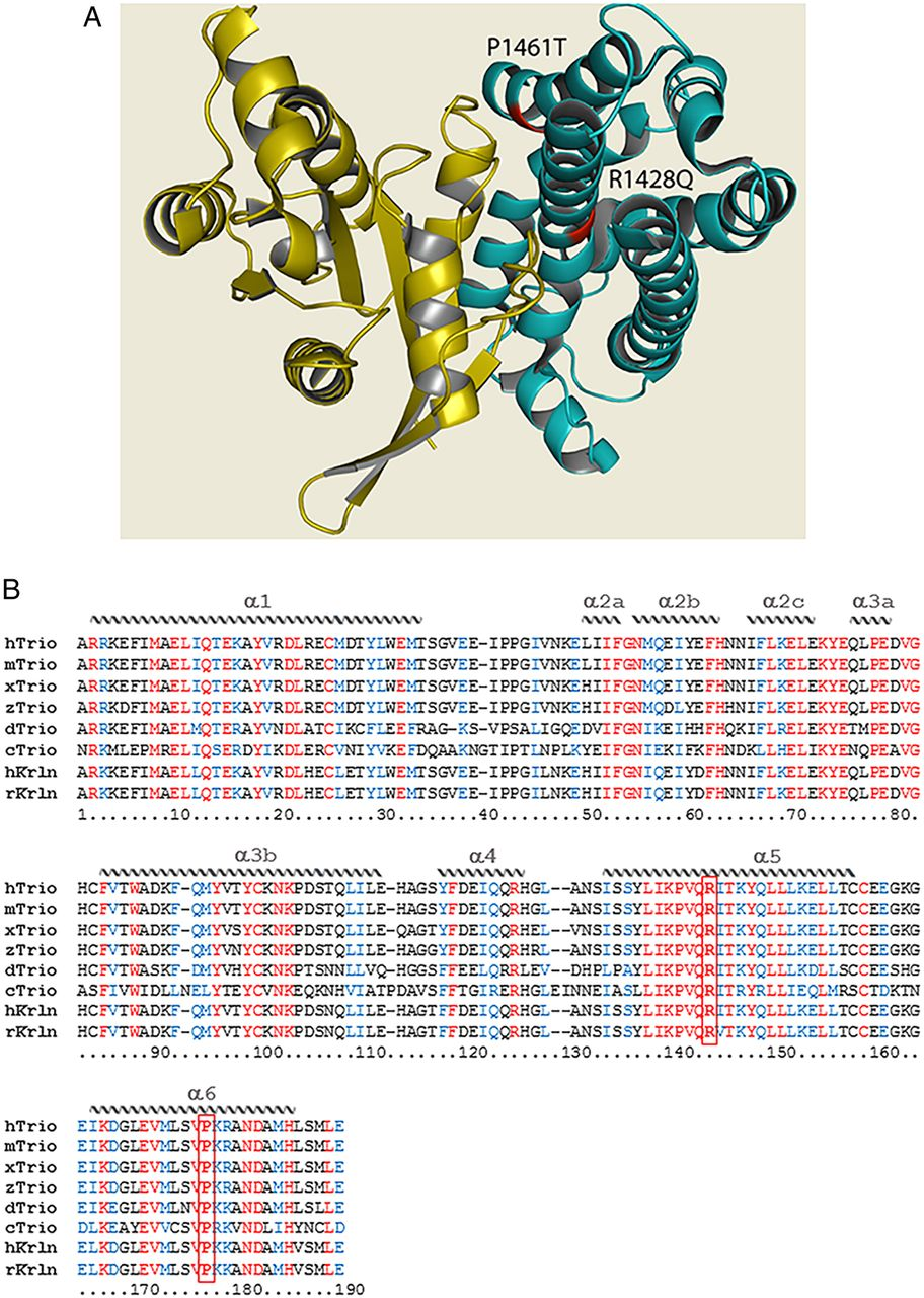 mutations specific to the rac