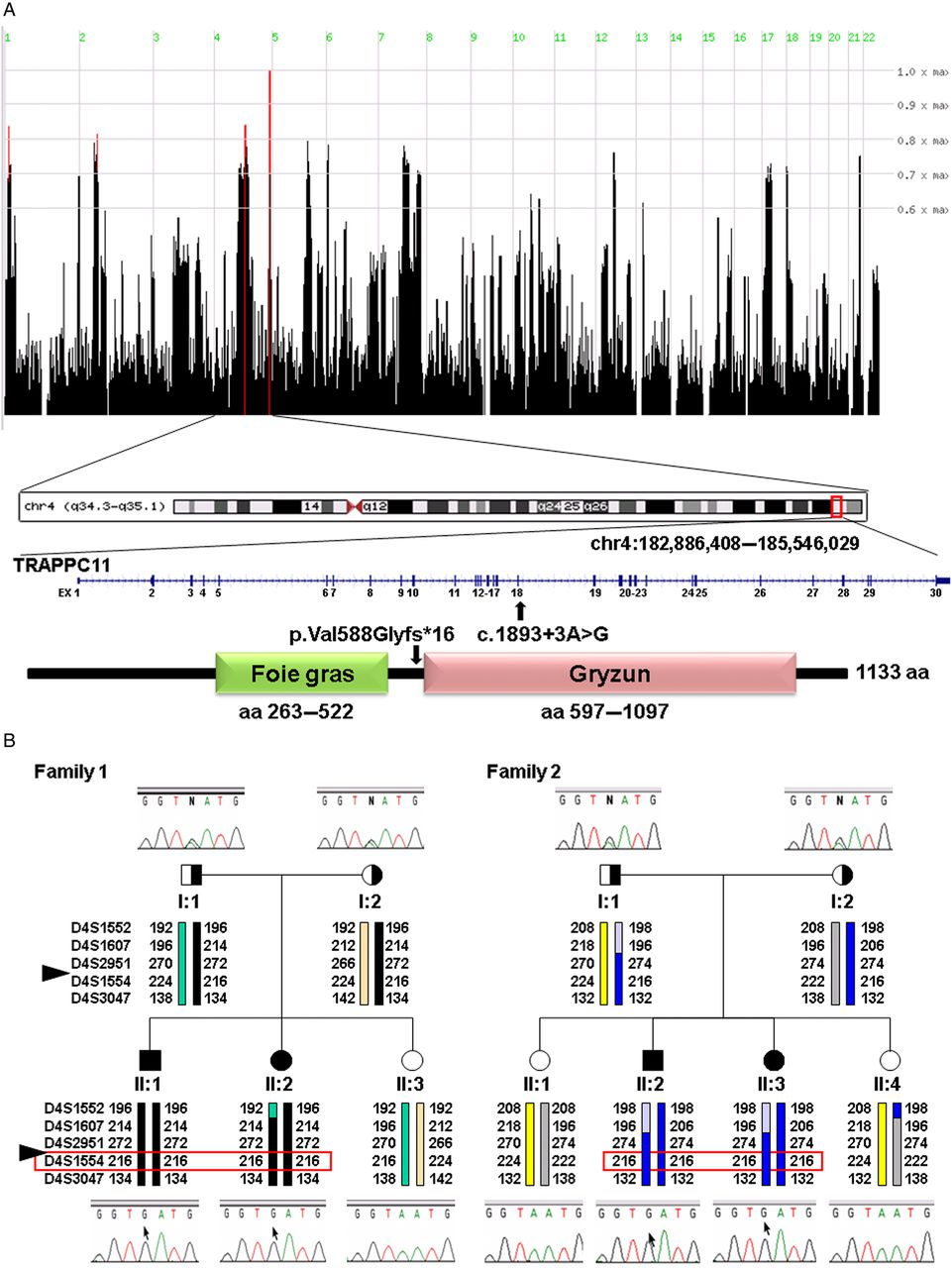 A novel TRAPPC11 mutation in two Turkish families associated
