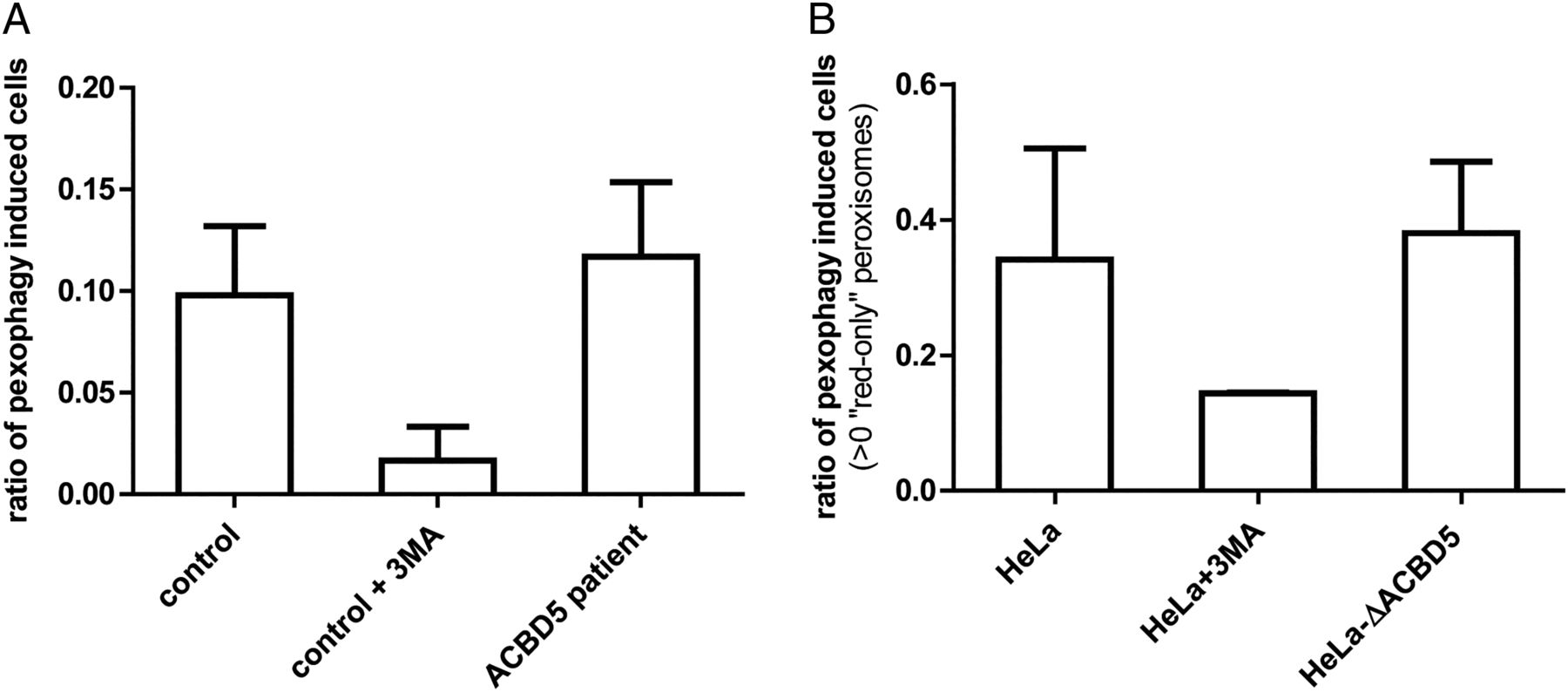 ACBD5 deficiency causes a defect in peroxisomal very long
