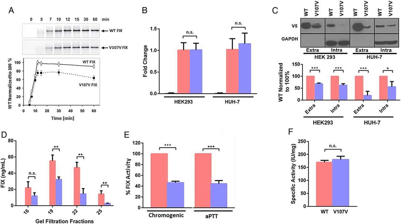 Single synonymous mutation in factor IX alters protein properties