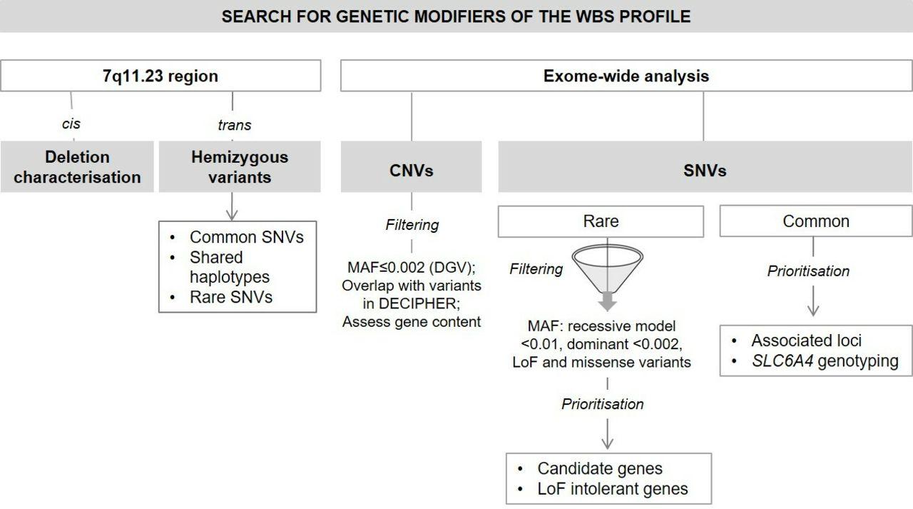 Genetic factors contributing to autism spectrum disorder in